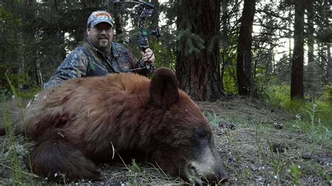 Idaho Black Bear Hunting with Miles High Outfitters - Hound Hunting Specialist ...