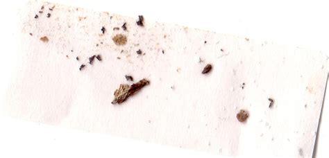 kitchen cabinet bugs carpet beetle frass floor matttroy 2379