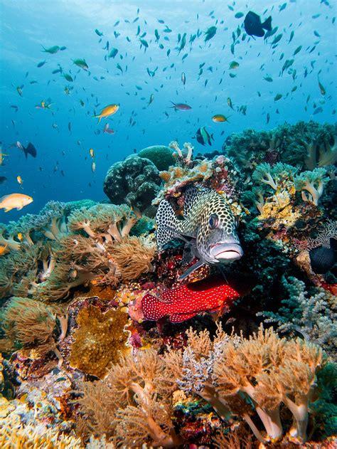 coral underwater reefs tubbataha paradise fish tropical flash hello