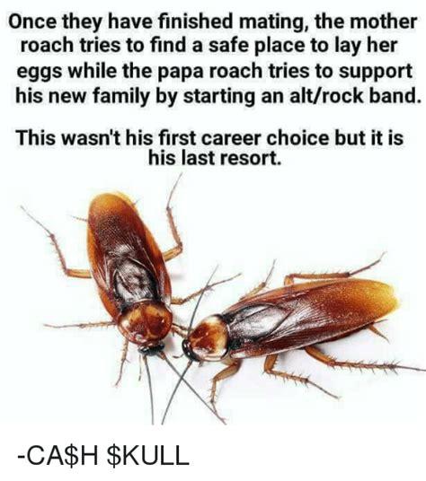 Roach Meme - 25 best memes about last resort last resort memes