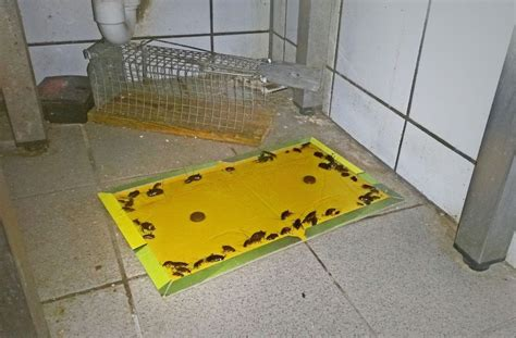 Mäuse In Der Küche by Stuttgarter Ekel Report 2016 Kakerlaken Machen Asia Lokal