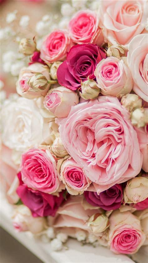 fonds decran bouquet rose fleurs rose blanc banc