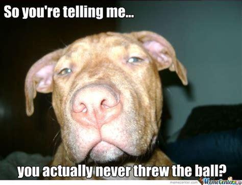 Pitbull Puppy Meme - pinterest the world s catalog of ideas