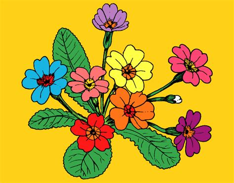 Colored Page Primula Painted By Mindella