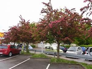 Schnell Wachsende Laubbäume Für Den Garten : kleinkronige b ume der richtige baum f r den kleinen ~ Michelbontemps.com Haus und Dekorationen