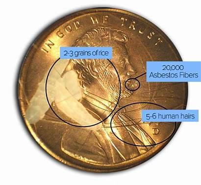 Asbestos Comparison Testing Fiber Human Fibers Penny