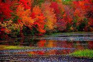 Leaf Color Fall Foliage