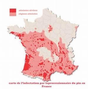 Piege A Chenille Processionnaire Du Pin : chenilles processionnaires le blog des moug res ~ Premium-room.com Idées de Décoration