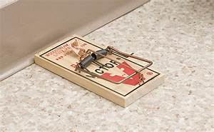 7 Mouse Trap Mistakes You U0026 39 Re Making