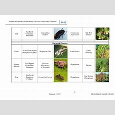 List Of Insect Vector Transmitted Plant Diseases & Terminology