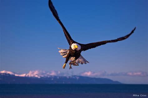 Flying High • The National Wildlife Federation Blog