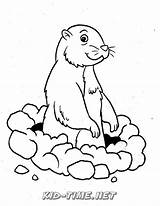 Gopher Coloring Pages Animals Printable Visit Printables sketch template