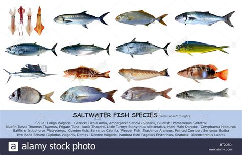 fish species saltwater classification seafood isolated