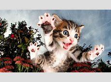 Katzenbilder Neuer Bildband von Seth Casteel SPIEGEL ONLINE