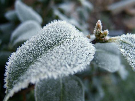 frost plants cold plant weather damaged save environment damage freeze freezing protection tips heavy saving forecasts money enca haliburton advisory