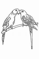 Coloring Parrot Mating Pages Print Colornimbus Parrots Sheets Cute Colour sketch template