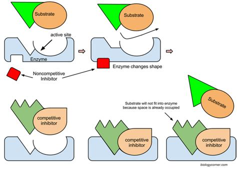 Types of Enzyme Inhibition
