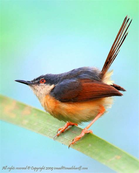bird spots in southern india 17 best images about indian birds on hyderabad