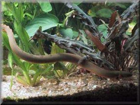 mon serpent d aquarium ma famille mes ami e s et tofs