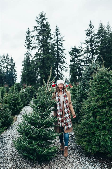 my christmas traditions to vogue or bust