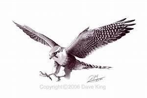 falcon tattoo | Peregrine Falcon Tattoo Phoenix wings ...