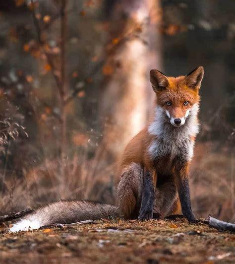 Photographer Captures Enchanting Photos of Finland s