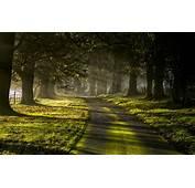 Nature Landscape Sun Rays Road Trees Sunrise Grass