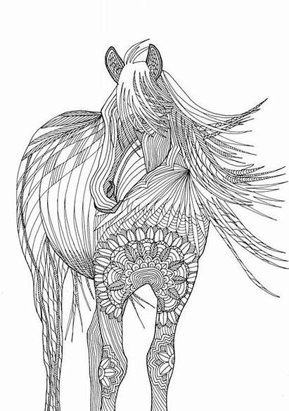 Coloring Pages Adult Adults Horse Printable Animal