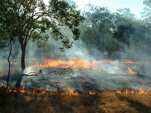 Savanna Burning  Carbon Pays For Conservation In Northern
