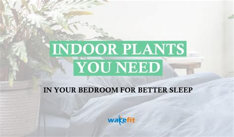 10 Plants For Your Bedroom To Help You Sleep Better