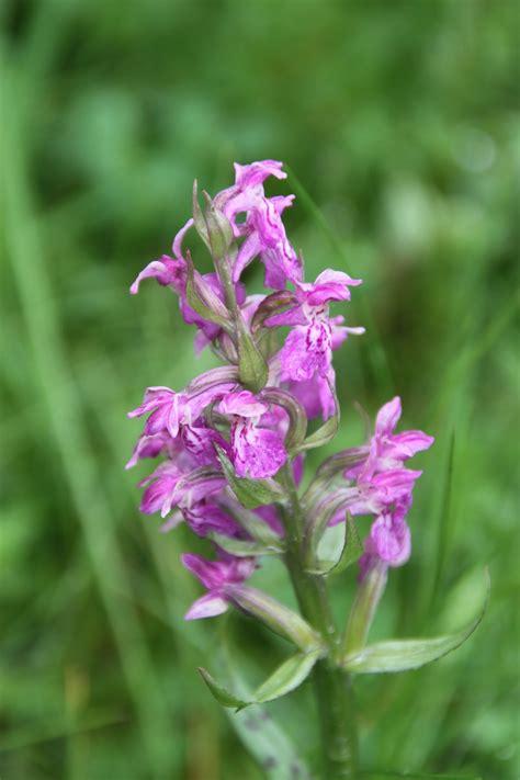 Gambar : menanam padang rumput herba botani Flora