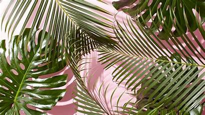 Desktop Aesthetic Plant Leaves Tropical Wallpapers Backgrounds