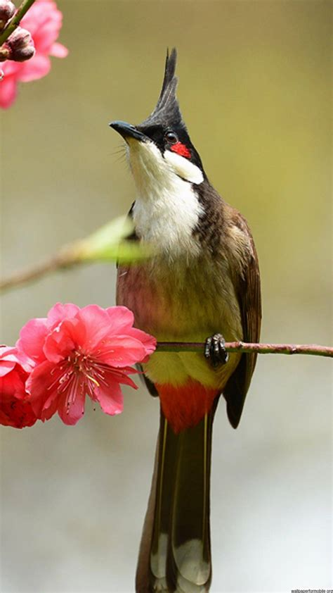 Birds Wallpaper Birds Wallpaper Download Supportive Guru