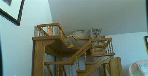 jeux pour chat maison un homme transforme sa maison en un paradis pour chats vid 233 o etrange et insolite