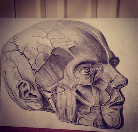 Skull Natural Forms Sophiegashman Deviantart