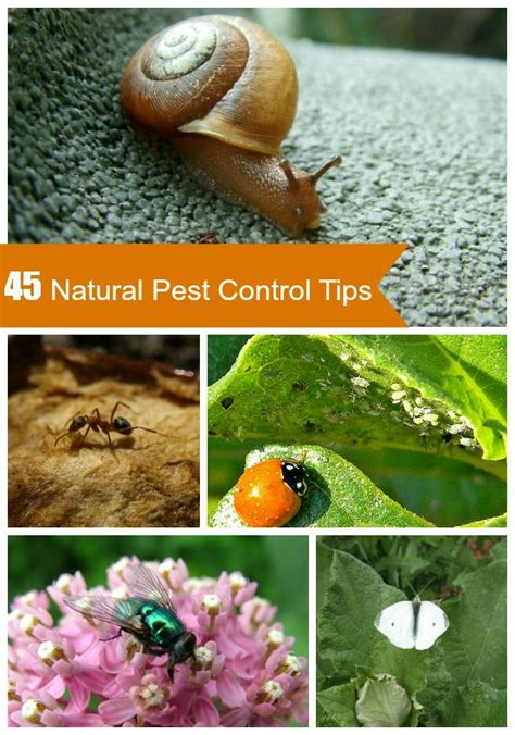 9 Best Images About Pests  How To Get Rid Of Them On