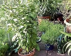 Kübelpflanzen Für Schatten : k belpflanzen schatten und luft ~ Eleganceandgraceweddings.com Haus und Dekorationen