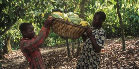 UTZ becomes International Cocoa Initiative's first ...