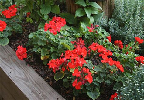 florist winter garden fl best images about monarda on