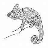 Chameleon Coloring Animal Adults Vector Zentangle Illustration Drawing Pattern Line Sharp Cartoon Lines Lace Depositphotos Japan Nature Vectors Illustrations Getdrawings sketch template
