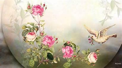 Flower Bird Flowers Spring Wallpapers Summer Roses