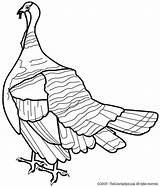 Coloring Turkey sketch template