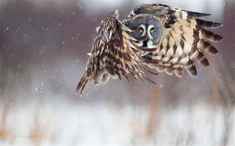 Owl Wallpapers by Best Beautiful Hd Wallpapers For Desktop Basckground Owl