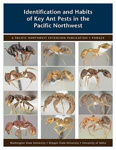 Identification And Habits Of Key Ant Pests In The Pacific