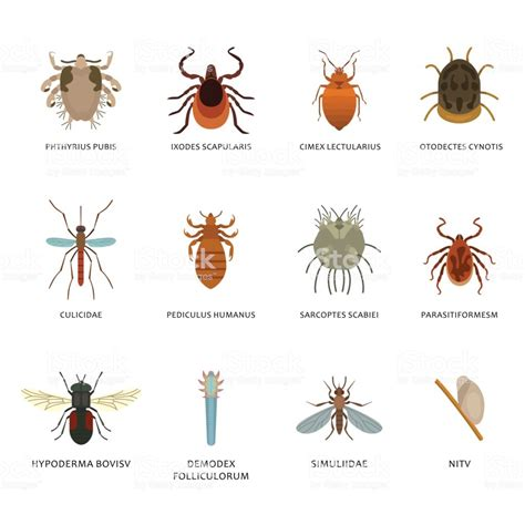 Welche Insekten Beißen by Human Skin Parasites And Housing Pests Insects Isolated
