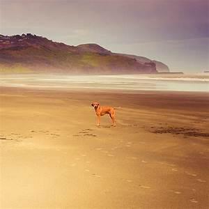 Beach / animals / dog   Flickr - Photo Sharing!