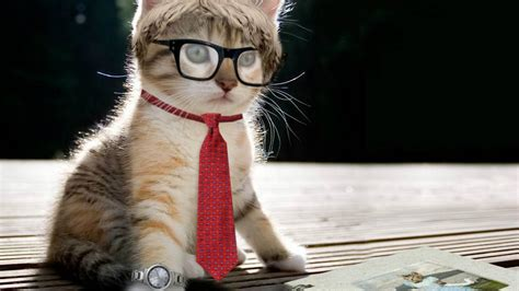 Funy Fictures HD : Free Download Funny Cat Hd Wallpaper