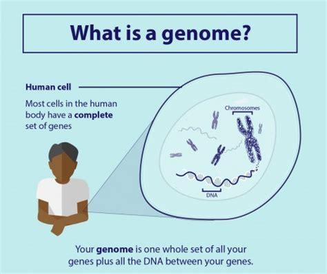 Understanding Genomics  Genomics England
