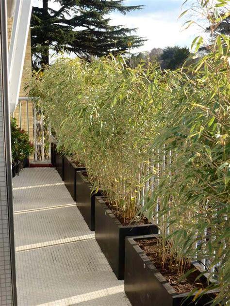 bambou en pot pour balcon les 25 meilleures id 233 es de la cat 233 gorie brise vue sur brise vue bois brise vue