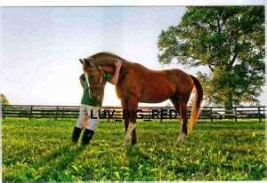 marquetrythoroughbred racehorse millionmultiple